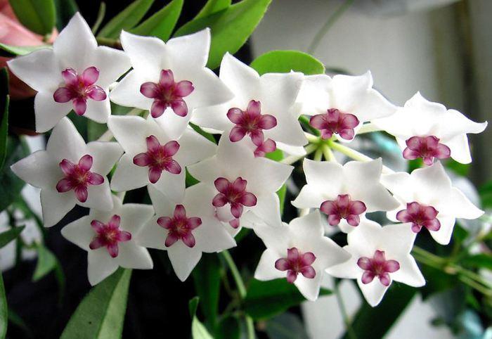 Цветок для семейного счастья