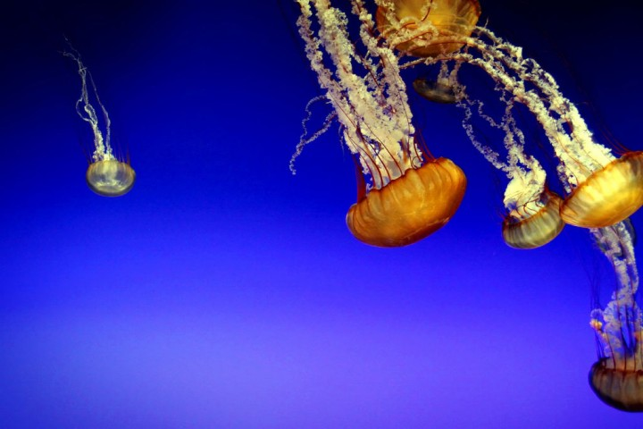 56 Удивительный подводный мир