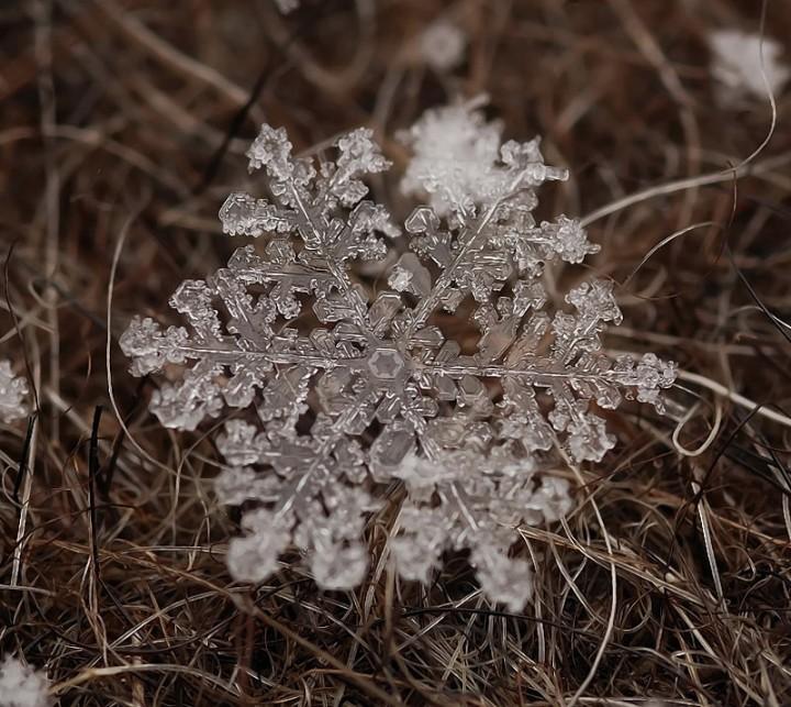 snejinkimakro 2 Снежинки. Фотограф Андрей Осокин