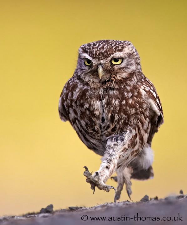 bestofwild17 Лучшие фотографии диких животных за 2013 год
