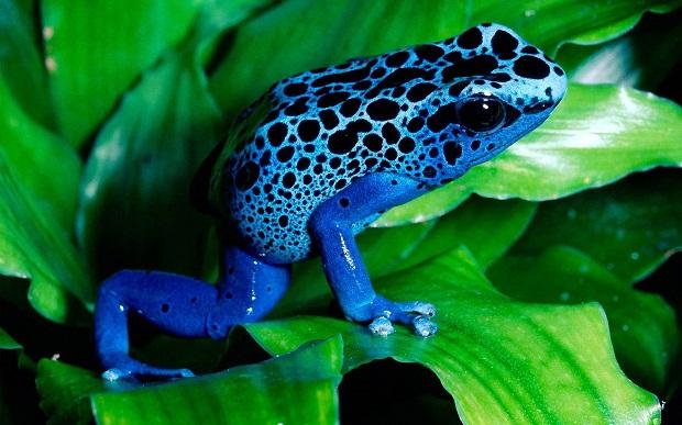 10 самых ядовитых животных на планете...