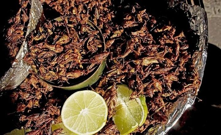 edible14 Фотогид по съедобным насекомым