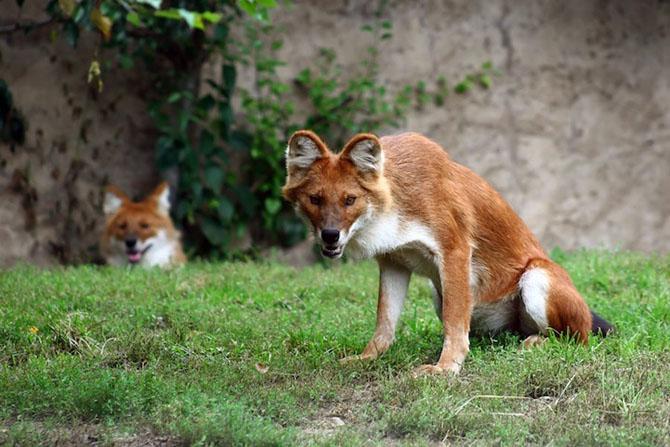 Животные, о существовании которых вы и не знали
