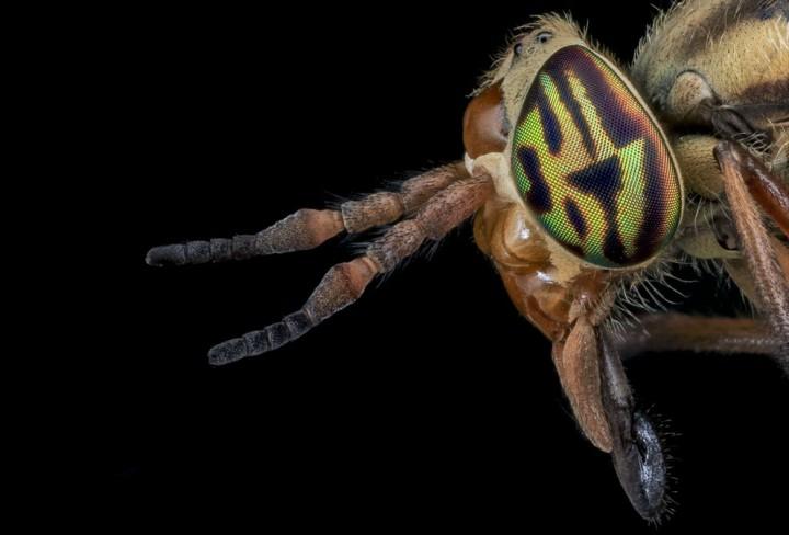 Insects18 Прекрасные насекомые
