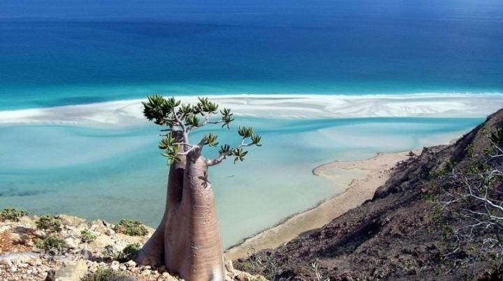 Socotra03 Удивительный остров Сокотра