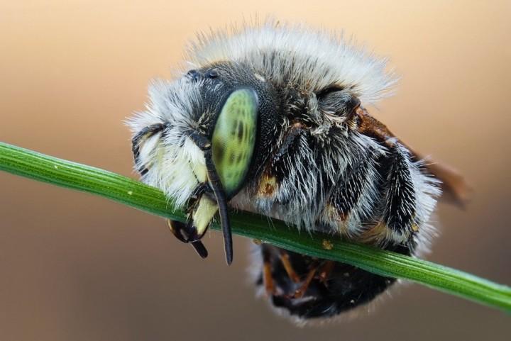 insects55 Портреты насекомых