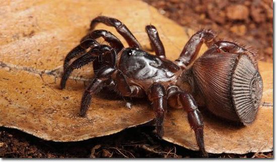 6 пауков из ночных кошмаров