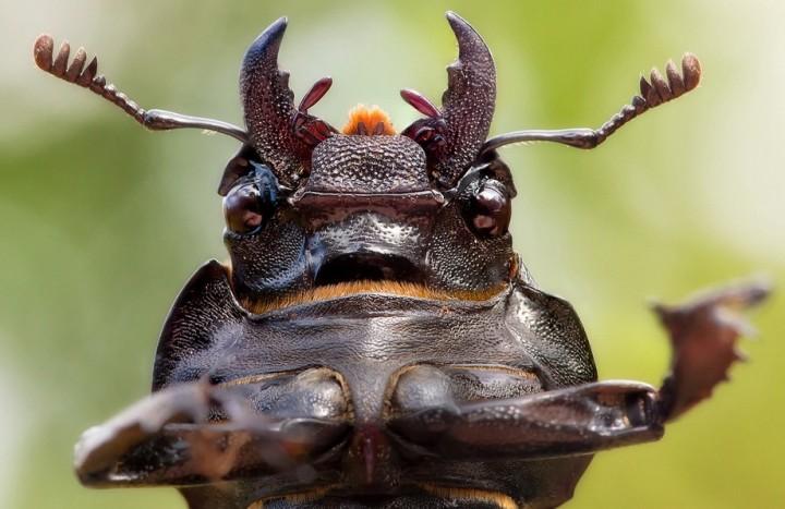 insects43 Портреты насекомых