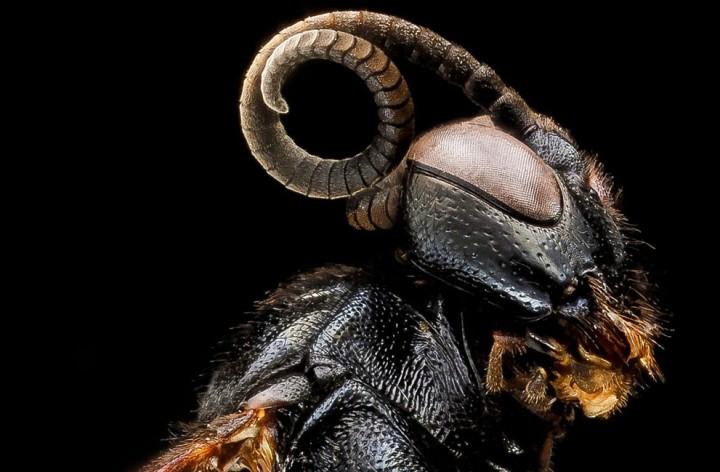Insects10 Прекрасные насекомые