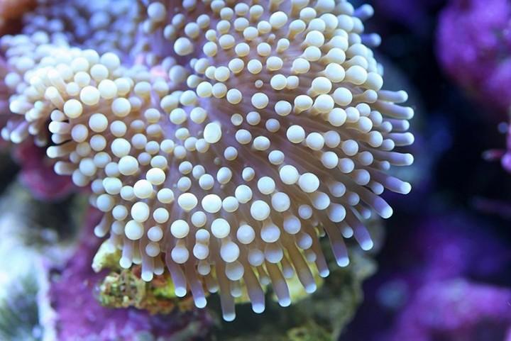 Макросъемка подводного мира