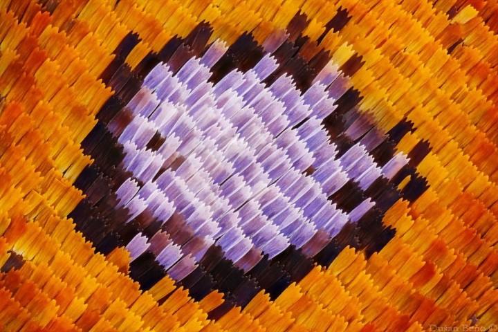 DusanBeno03 Удивительные и яркие макрофотографии Душана Бено