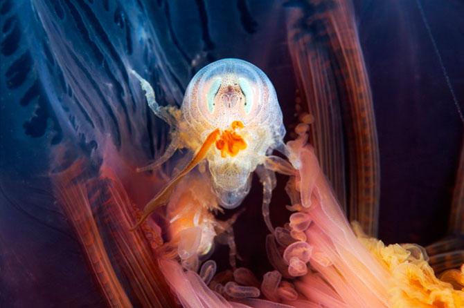 Морские организмы на фотографиях Александра Семёнова