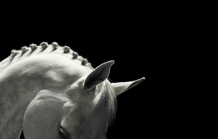 Tim Flac Грация прекрасных лошадей в фотопроекте Equus