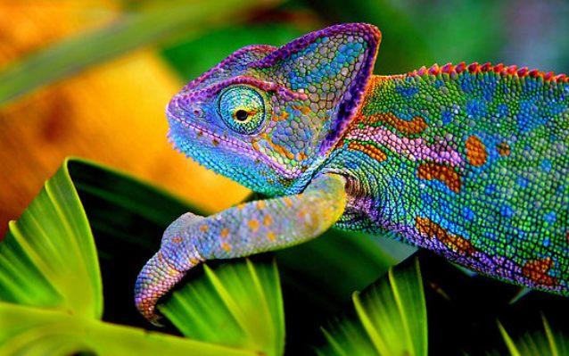 Животные с невероятными глазами