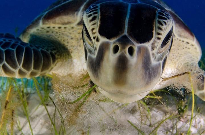 bestofwild07 800x530 Лучшие фотографии диких животных за 2013 год