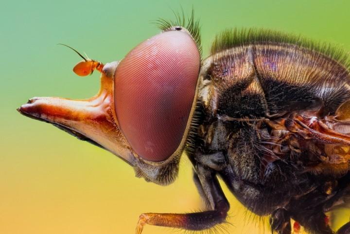 insects29 Портреты насекомых
