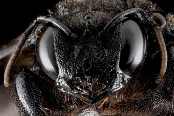Insects06 Прекрасные насекомые
