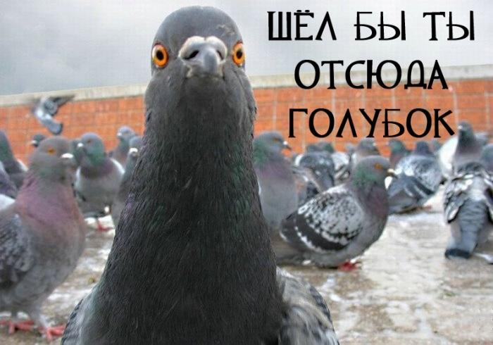 Помогите советом как прогнать голубей с балкона?.