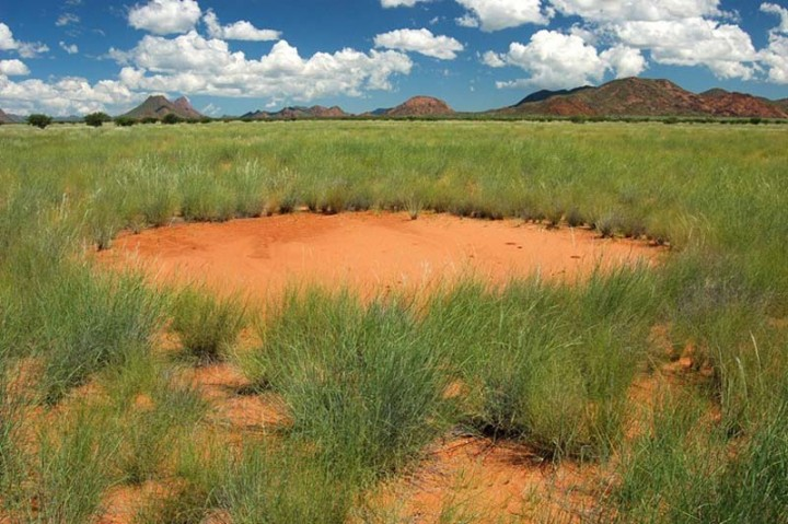 mysterious fairy circles of namibia 7 Таинственные круги Намибии