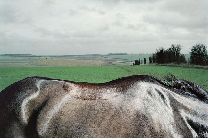 338186 Грация прекрасных лошадей в фотопроекте Equus