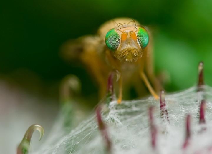 insects58 Портреты насекомых