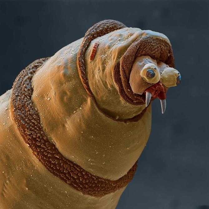 15 удивительных созданий, которых не разглядеть без микроскопа