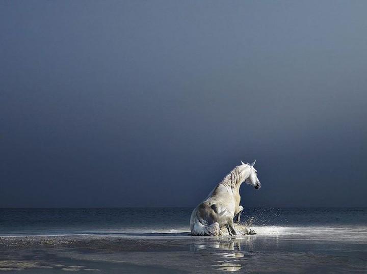 Horsei 17 Грация прекрасных лошадей в фотопроекте Equus