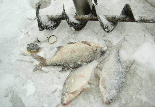 февральский лов леща