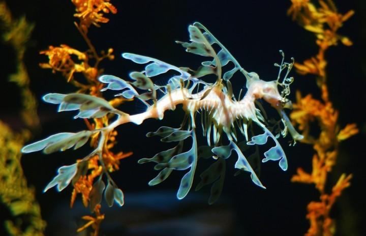 prichudlivieribi 3 Топ 10 самых причудливых рыб мирового океана
