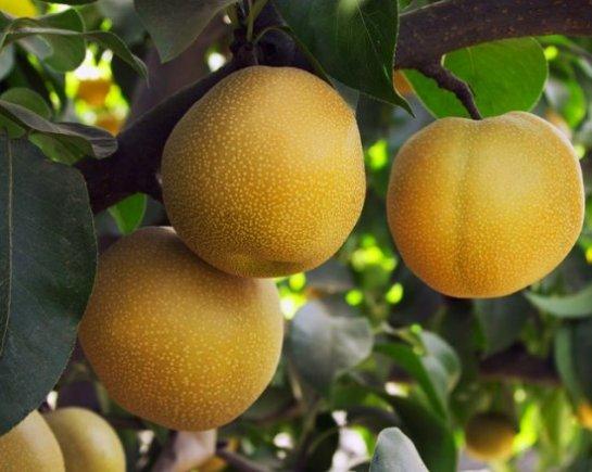 10  гибридов овощей и фруктов