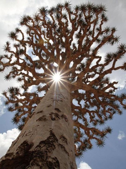 Socotra09 Удивительный остров Сокотра