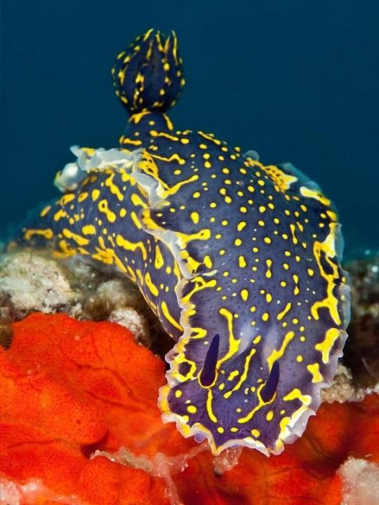 20 потрясающих примеров подводной фотографии