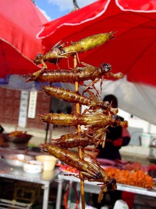 edible09 Фотогид по съедобным насекомым