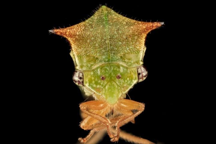 Insects11 Прекрасные насекомые