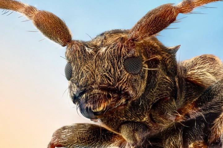 insects31 Портреты насекомых
