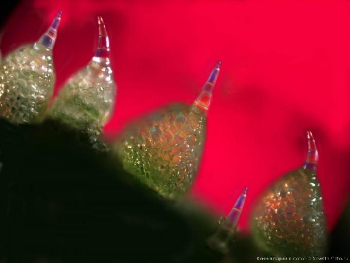 Ошеломляющие научные изображения | NewsInPhoto.ru Новости и репортажи в фотографиях (14)