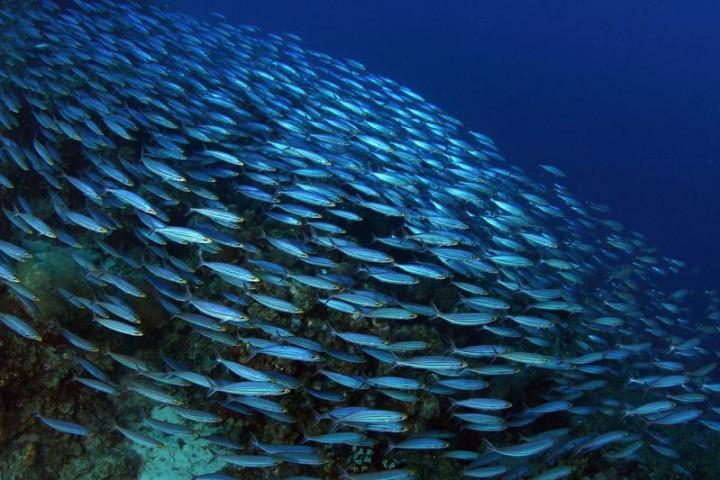 530 15 удивительных косяков рыбы