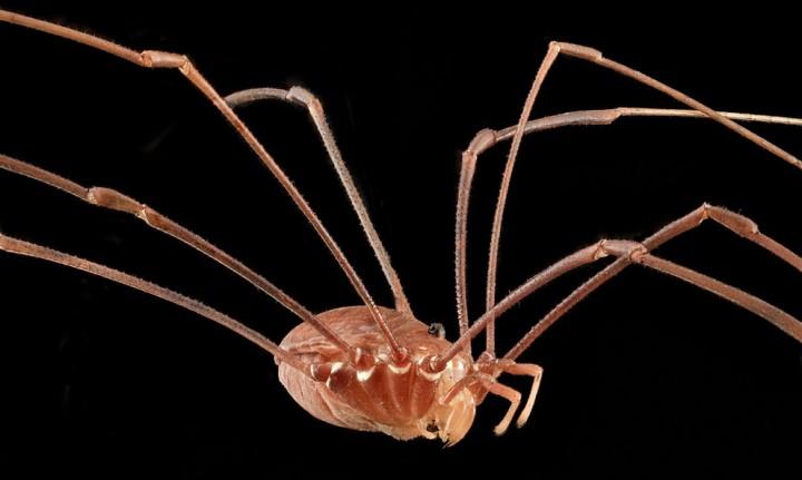 Insects02 Прекрасные насекомые