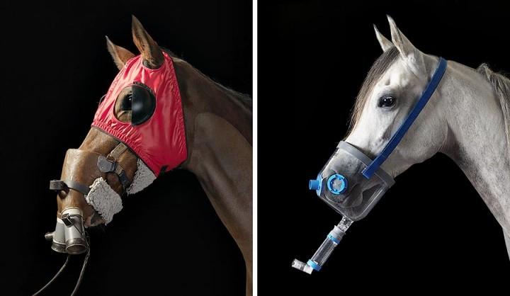 338193 Грация прекрасных лошадей в фотопроекте Equus