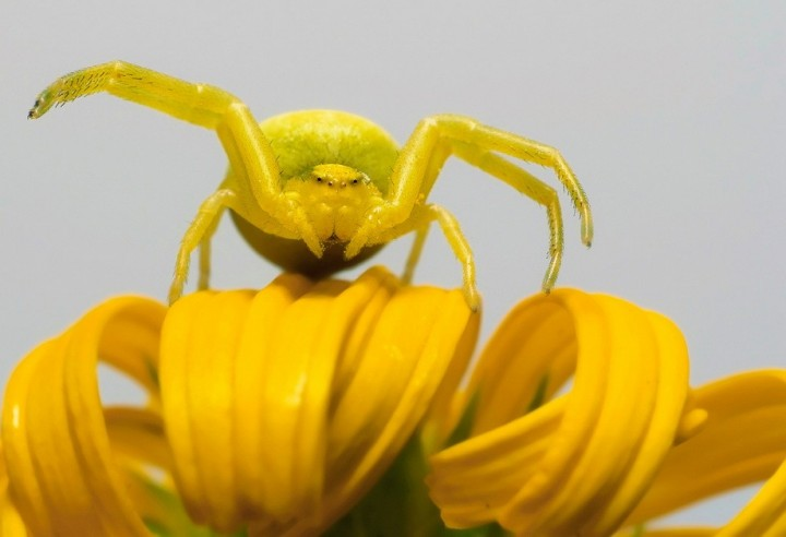 insects39 Портреты насекомых