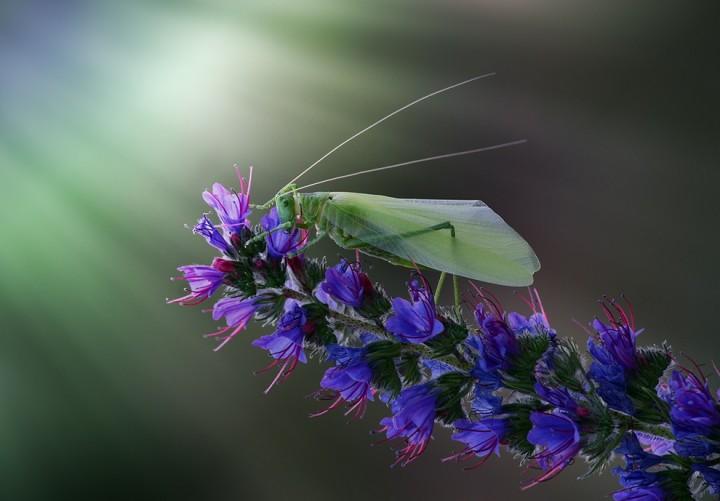 ulitkiinasekomie 14 Улитки и насекомые в макрофотографиях Вадима Трунова