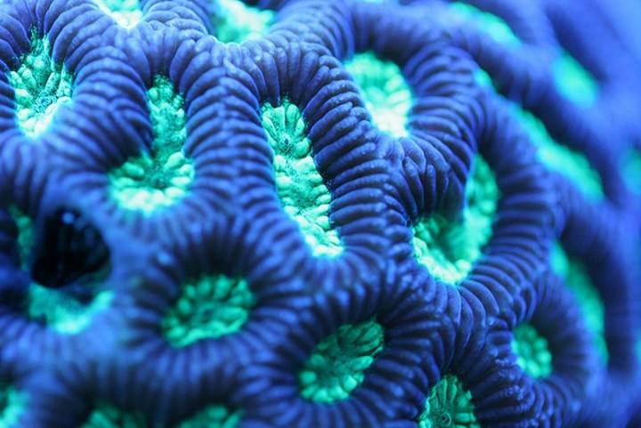 Удивительный макро-снимки кораллов