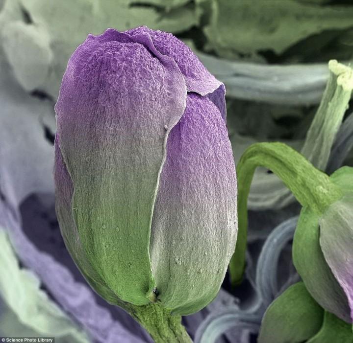 breakfast02 18 удивительных фото продуктов под микроскопом
