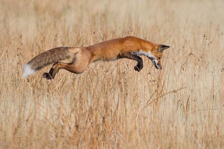 bestofwild03 Лучшие фотографии диких животных за 2013 год
