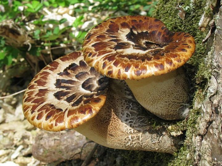 Fungi07 Самые красивые грибы в мире