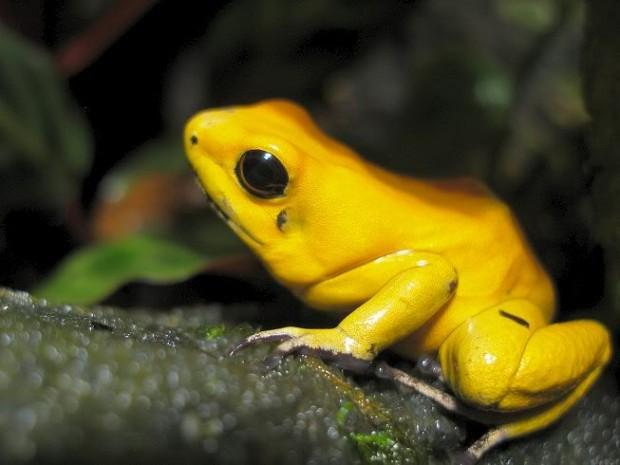 4 интересных факта о самых ядовитых животных в мире