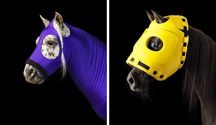 338195 Грация прекрасных лошадей в фотопроекте Equus