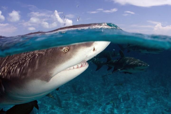 115 Удивительный подводный мир