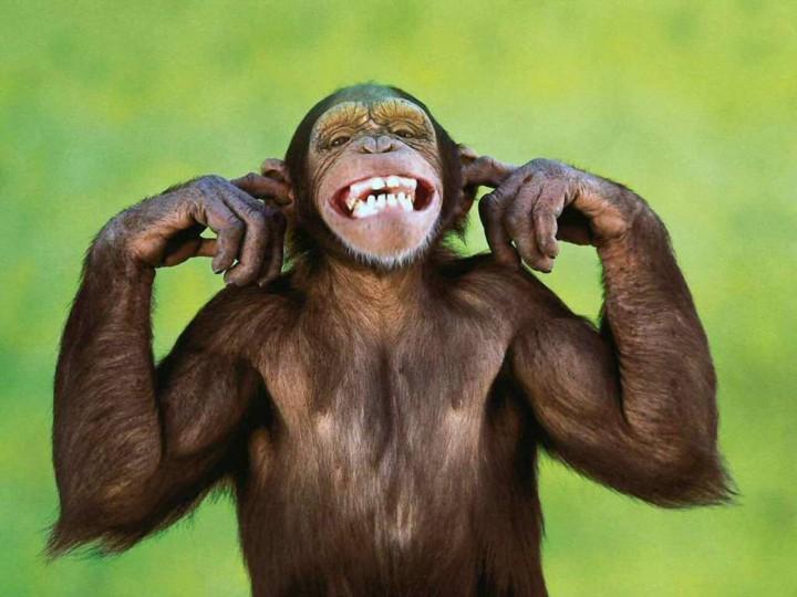 фото рожи обезьян смешные будет нервировать