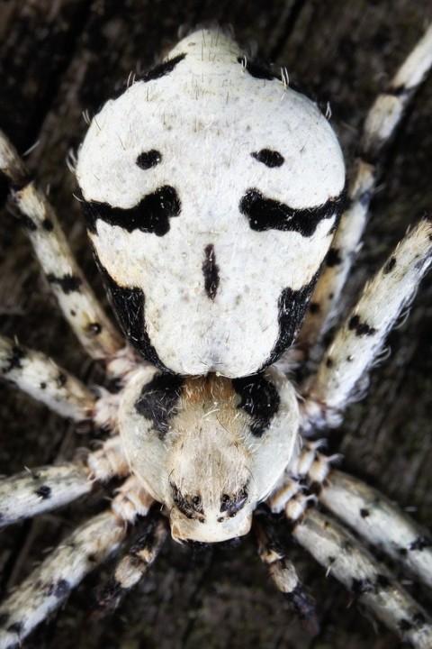 insects41 Портреты насекомых
